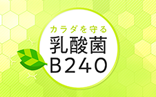 LivingLactic acid bacteria B240 lab (Japanese)well with menopause