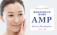 AMP helps the renewal of skin cells (Japanese)