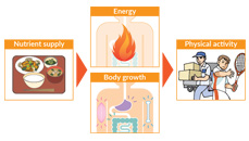 The role of nutrients and nutrient consumption   Otsuka
