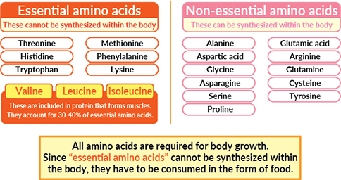 Image result for essential amino acid products