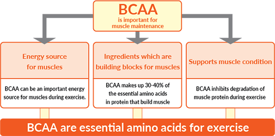 BCAA are essential amino acids for exercise