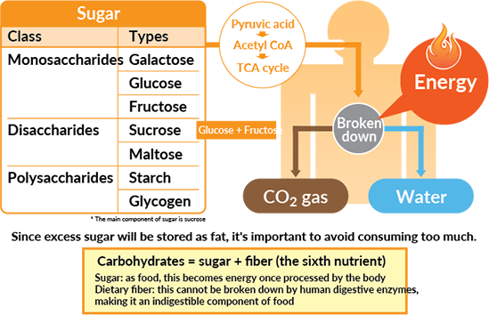 Carbohydrates An Efficient Energy Source Otsuka Pharmaceutical Co Ltd