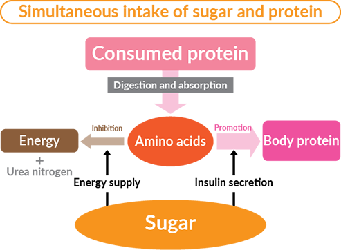Simultaneous intake of sugar and protein