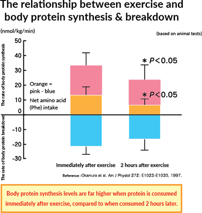 The relationship between exercise and body protein synthesis & breakdown