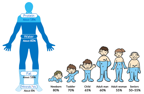 role of water in human body