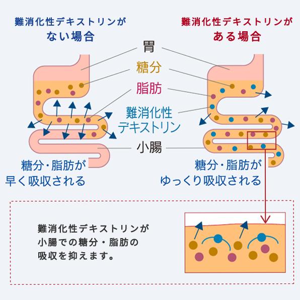 難消化性デキストリンが小腸での糖分・脂肪の吸収を抑えます。