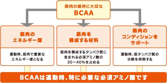 スポーツ活動におけるBCAA(分岐...
