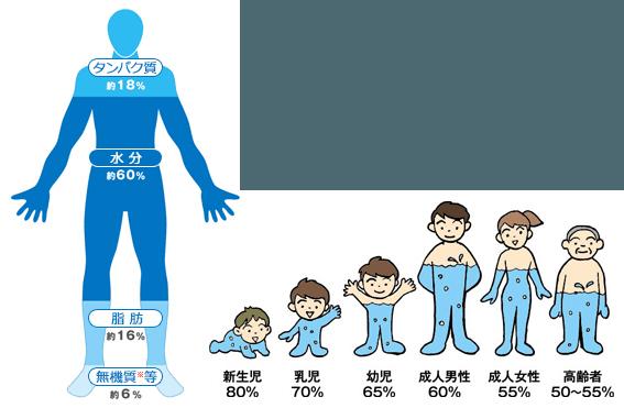 身体と水分 大塚製薬
